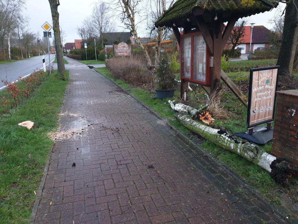 Die Birke an der Buttforderstraße hat`s nicht geschafft. Der Baum wurde bereits am Sonntag Nachmittag fachmännisch beseitigt
