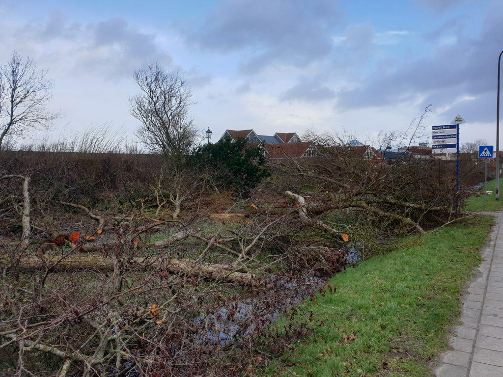Die alten Bäume sind abgeholzt, jetzt kann der Neubau beginnen