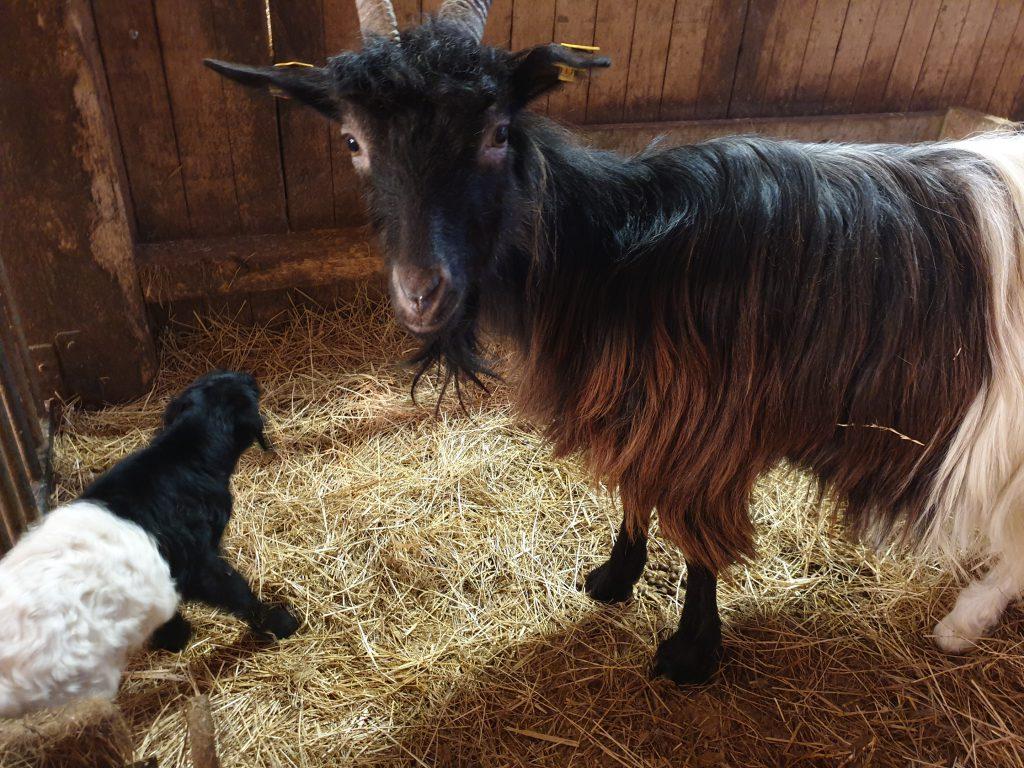 """Mama """"Helga"""" mit ihrem kleinen """"Johann"""""""