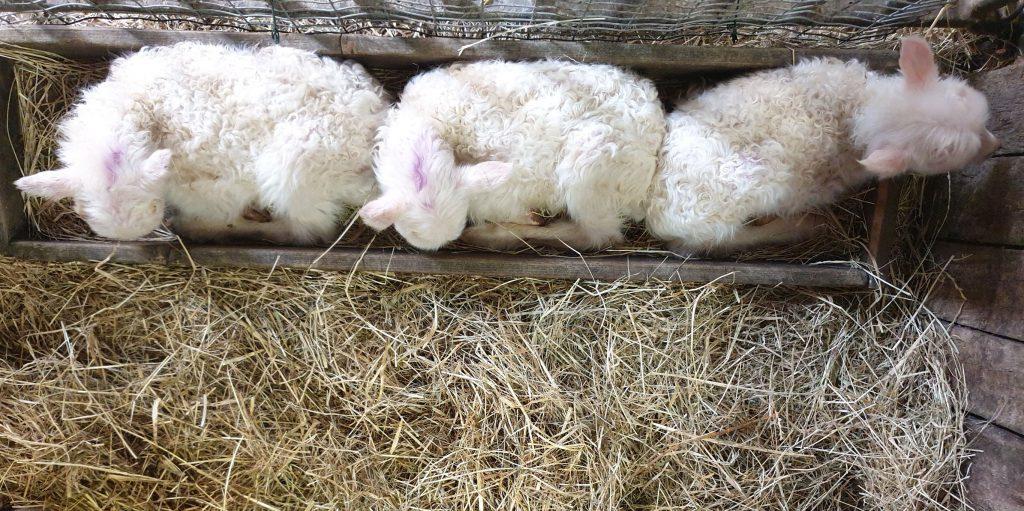 alle drei schlafen im Futterkrog