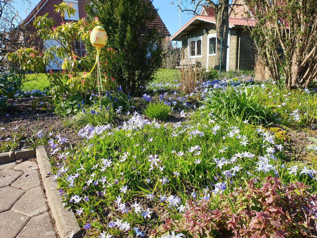 """Zumeist dominiert derzeit die Farbe """"gelb"""", bei Heiko Habben blühen die kleinen Eisblumen """"blau"""""""