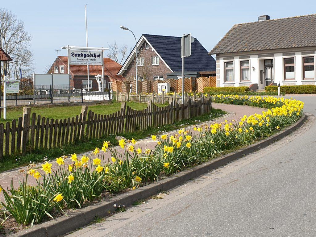 Blühende Narzissen an der Buttforderstraße am Brauhaus