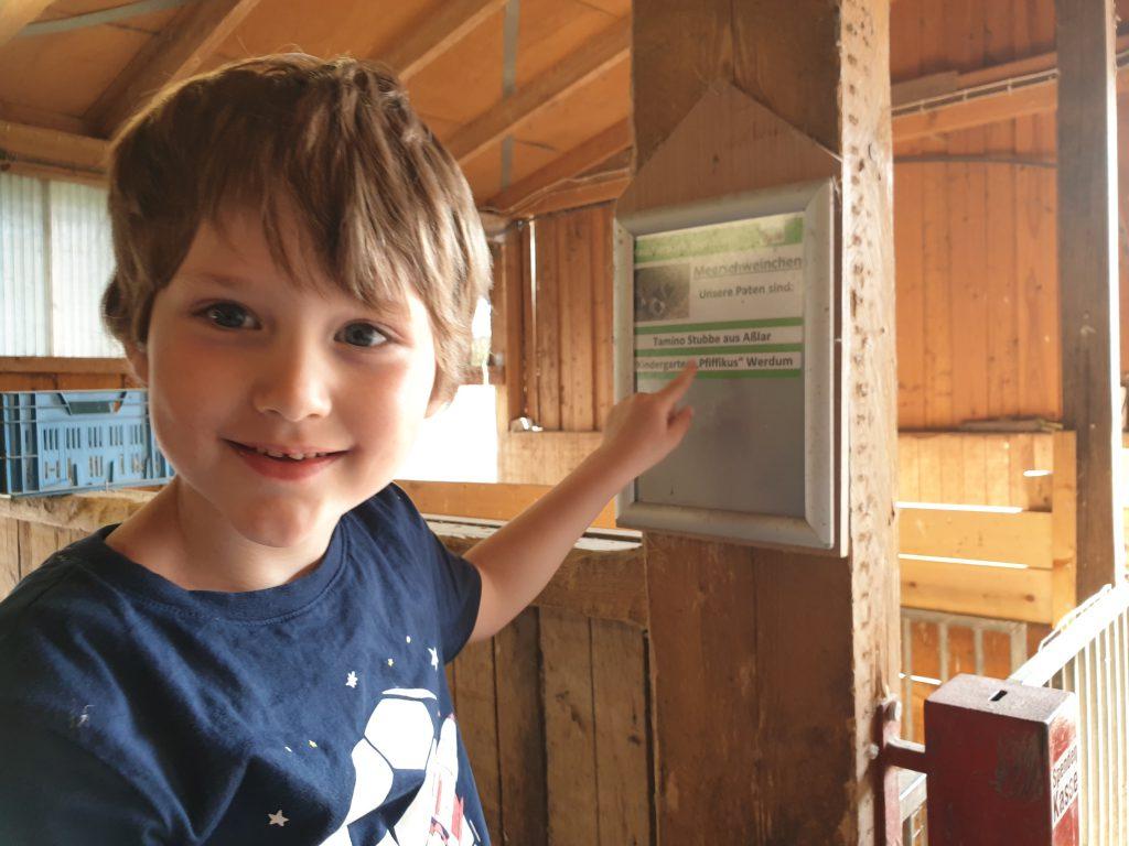 """Kindergarten-Opa"" Paul zeigt das neue Patenschild bei den Meerschweinchen"