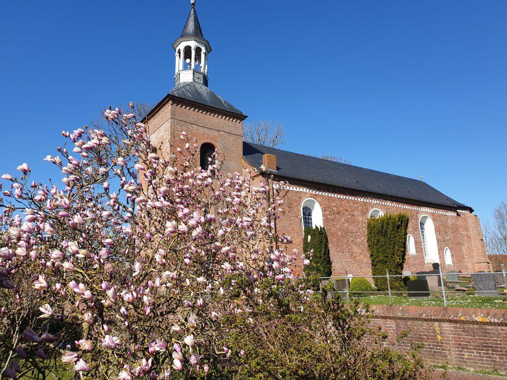 St.Nicolai mit einer blühenden Magnolie im Vordergrund