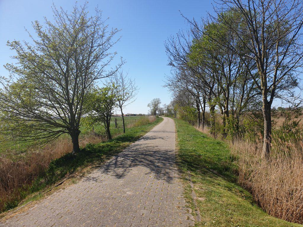Der Werdumer Kleiweg führt nach Thunum