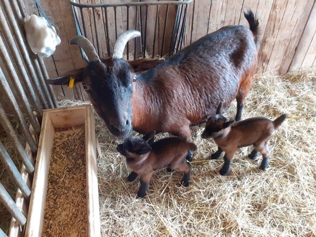 Am Karfreitag morgen wurden Hannelore und Annegret geboren