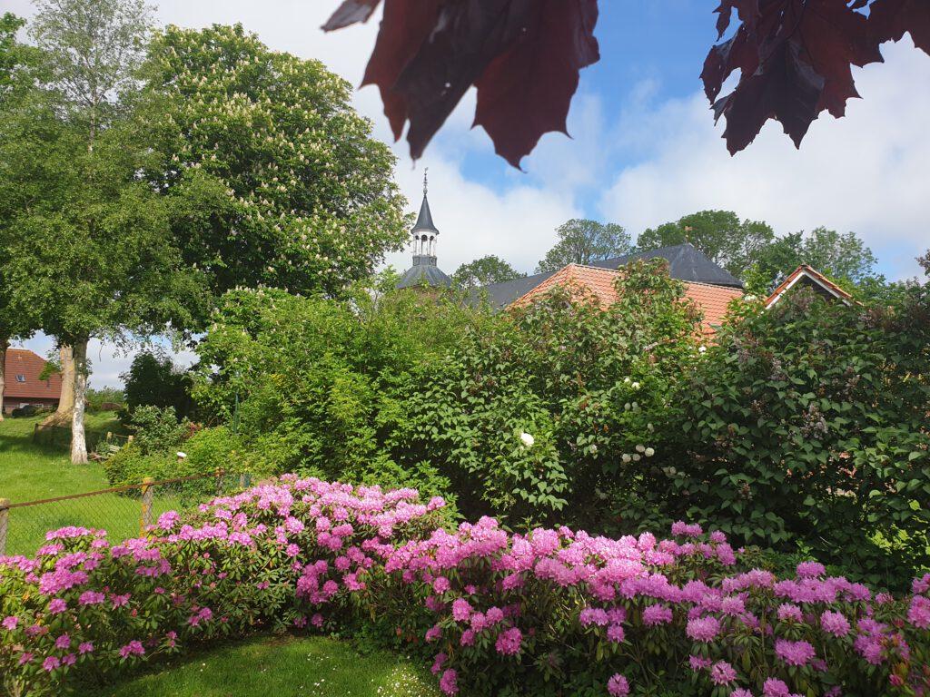 Am Ehrenmal blühen die Rhododendron besonders intensiv