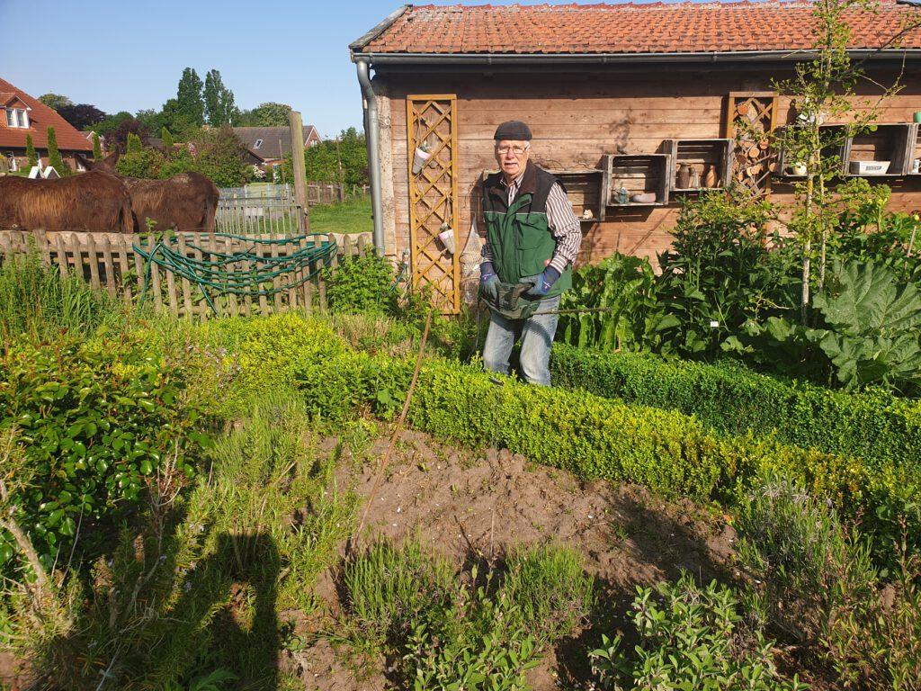 Heinz Olbertz schneidet die Buchsbaumhecke im Kräutergarten