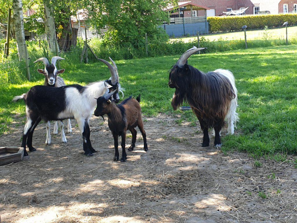 Die Herren auf der Bockweide (Norbert, Thomas, Anton und Ferdinand)