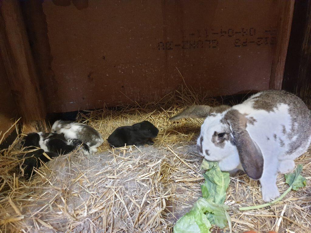 Die kleinen Kaninchen wachsen und gedeihen