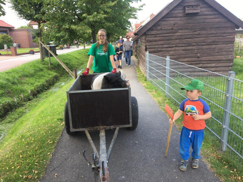"""""""Fienchen"""" lässt sich ganz gemütlich von Stefanie Runge und Hilfsarbeiter Lenny durch den Park chauffieren"""