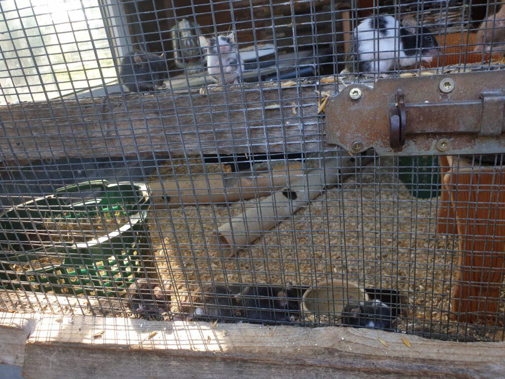 Die kleinen Mäuse trauen sich ganz ans Gitter und lassen sich sogar füttern