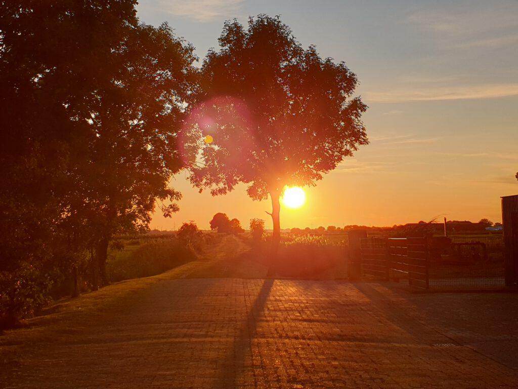 """Die Sonne geht am Bauhof am """"grünen Weg"""" unter"""
