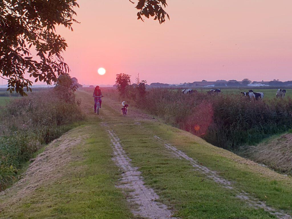 Ausflug mit Hund zum Sonnenuntergang