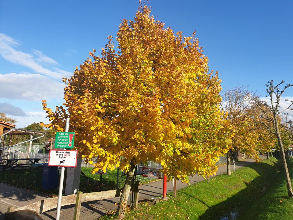 """Ein """"goldener"""" Baum am Eingang zum Haustierpark"""