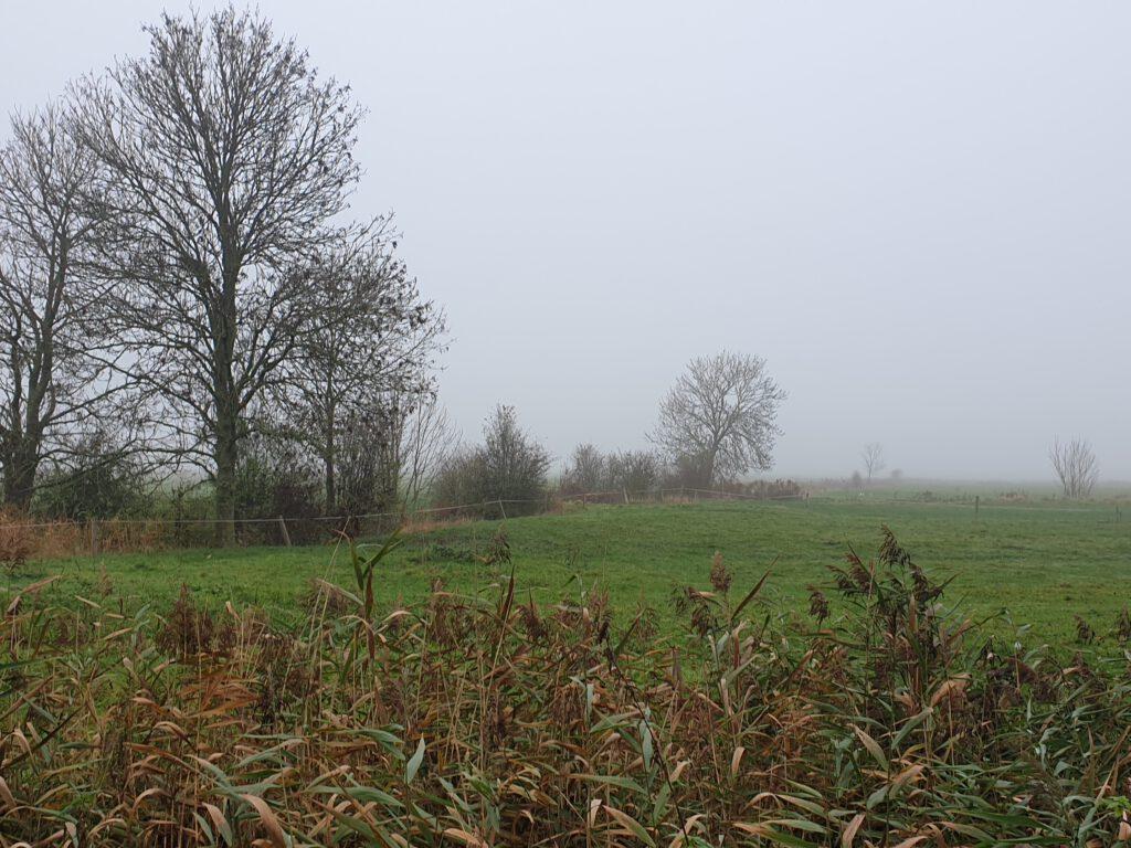 """Nebel sorgt für eine """"kleine Welt"""""""