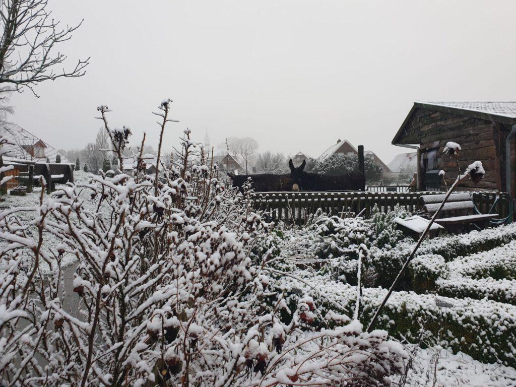 Blick über den Kräutergarten zur Eselweide