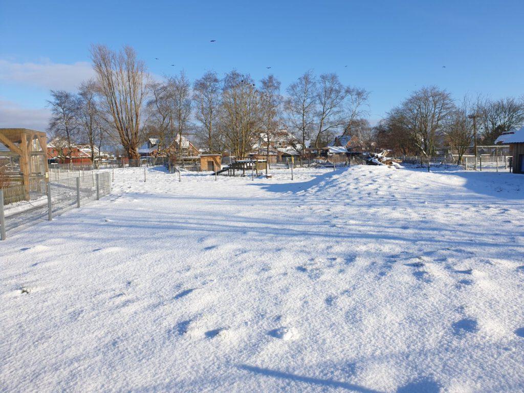 Die verschneite Ziegenweide