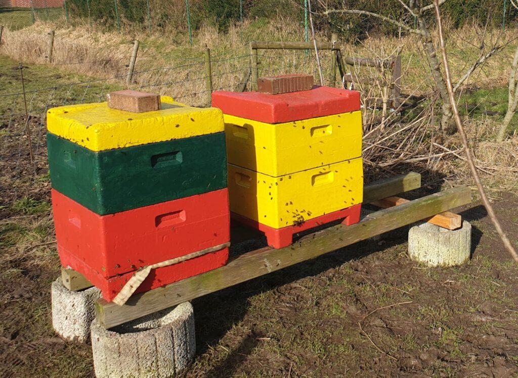 Die Bienenstöcke stehen wieder und die kleinen Brummer sind auch schon gleich unterwegs