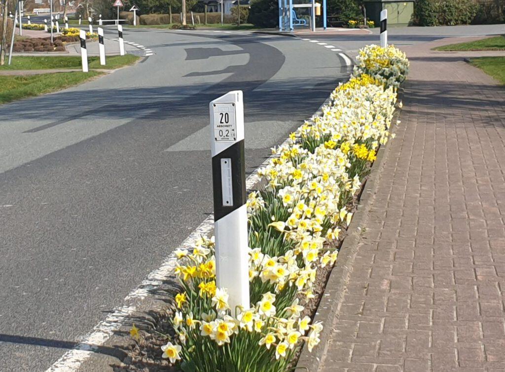 Blüte an Blüte vor der Bushaltestelle