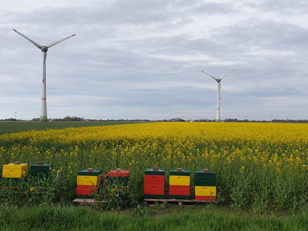 Blühender Raps mit Bienenstöcken im Vordergrund und Windkraftanlagen dahinter