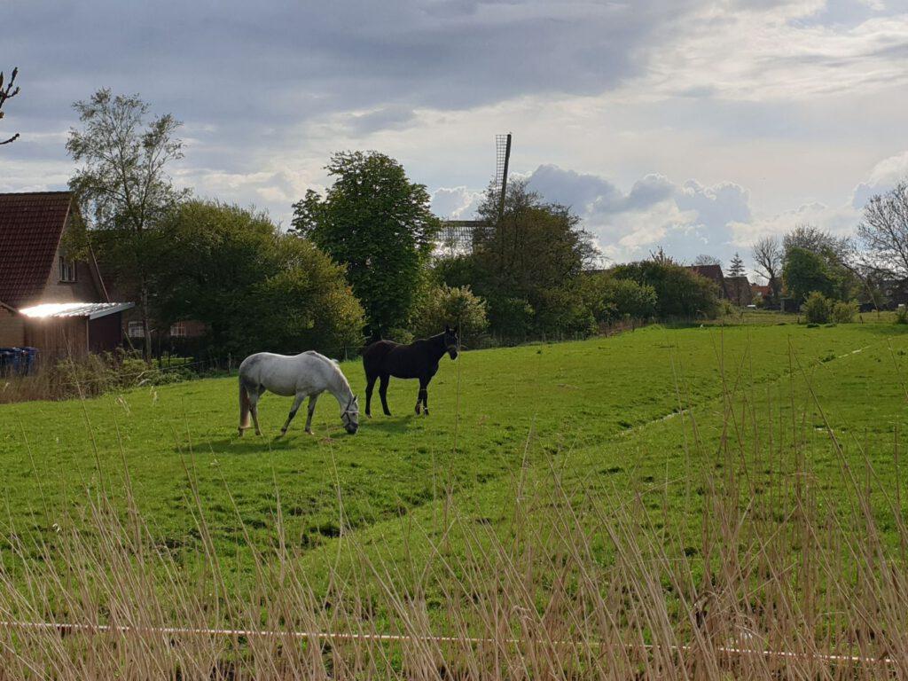 die beiden freuen sich über das frische Gras