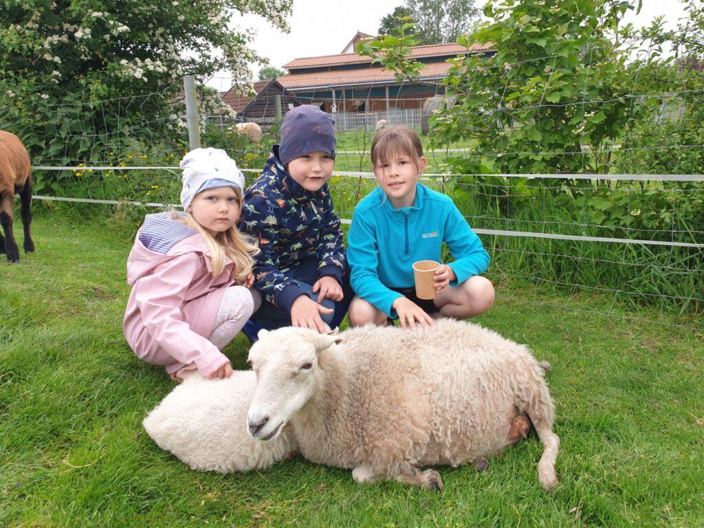 Die Schafe auf der Streichelwiese freuen sich über liebe Kinder (Gruß an Tante Wilma)
