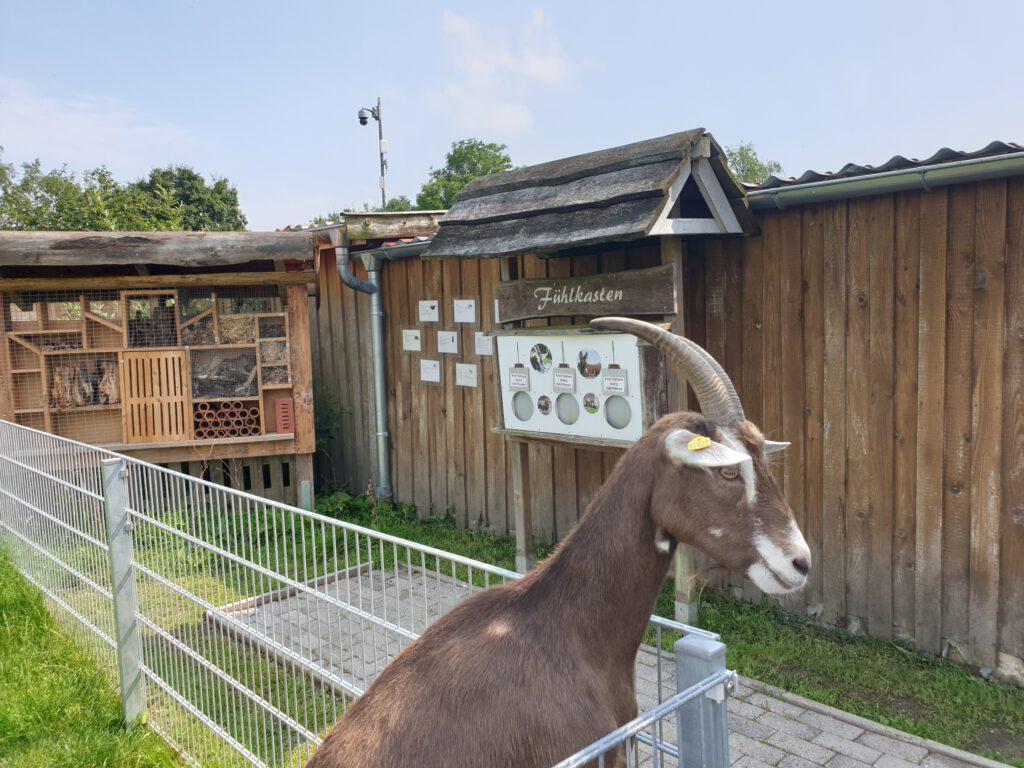 Das Bereich um das Insektenhotel ist jetzt gut aufgeräumt und für Besucher begehbar gemacht. Auch der Fühlkasten ist ein Projekt einer ehemaligen FÖJ`lerin
