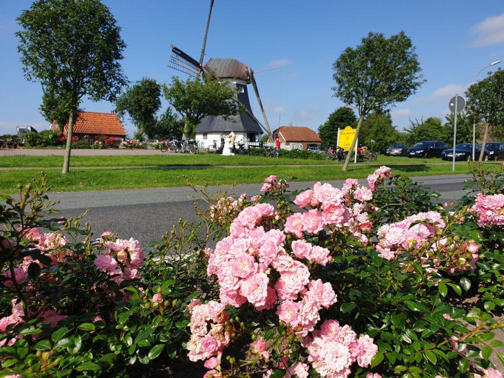 Die Mühle hinter der Rosenhecke