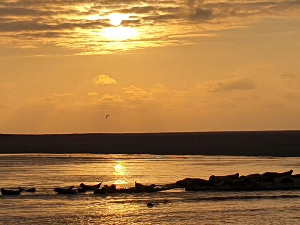 Sonnenuntergang mit Seehunden