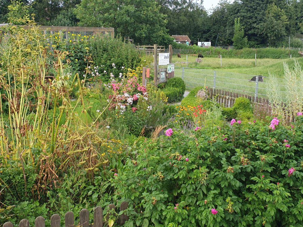 Im Kräutergarten blüht und duftet es sommerlich frisch
