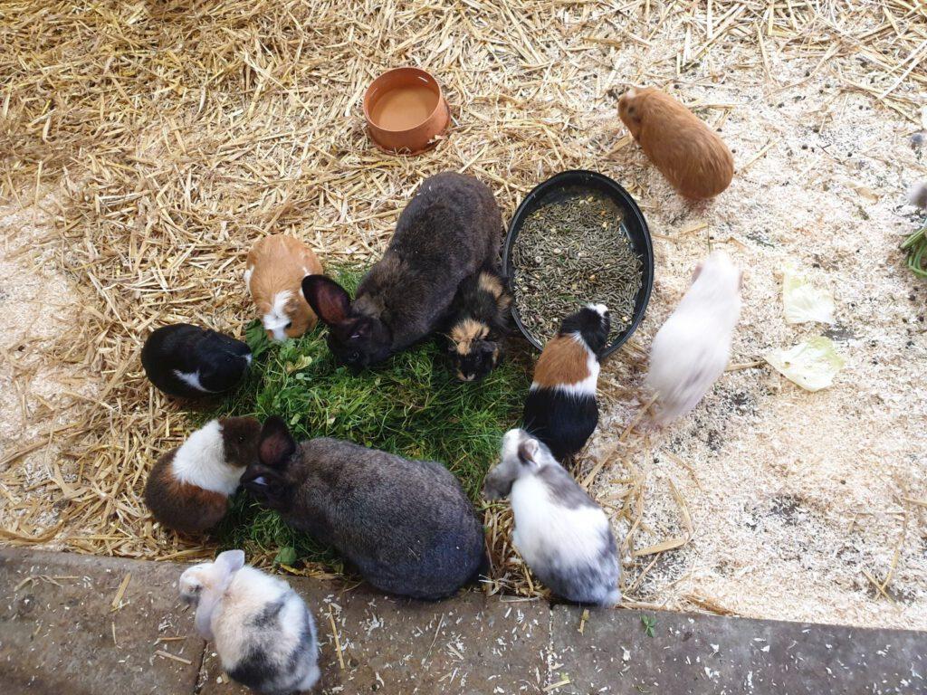 """""""Frühstück"""" für die Kaninchen und Meerschweinchen"""