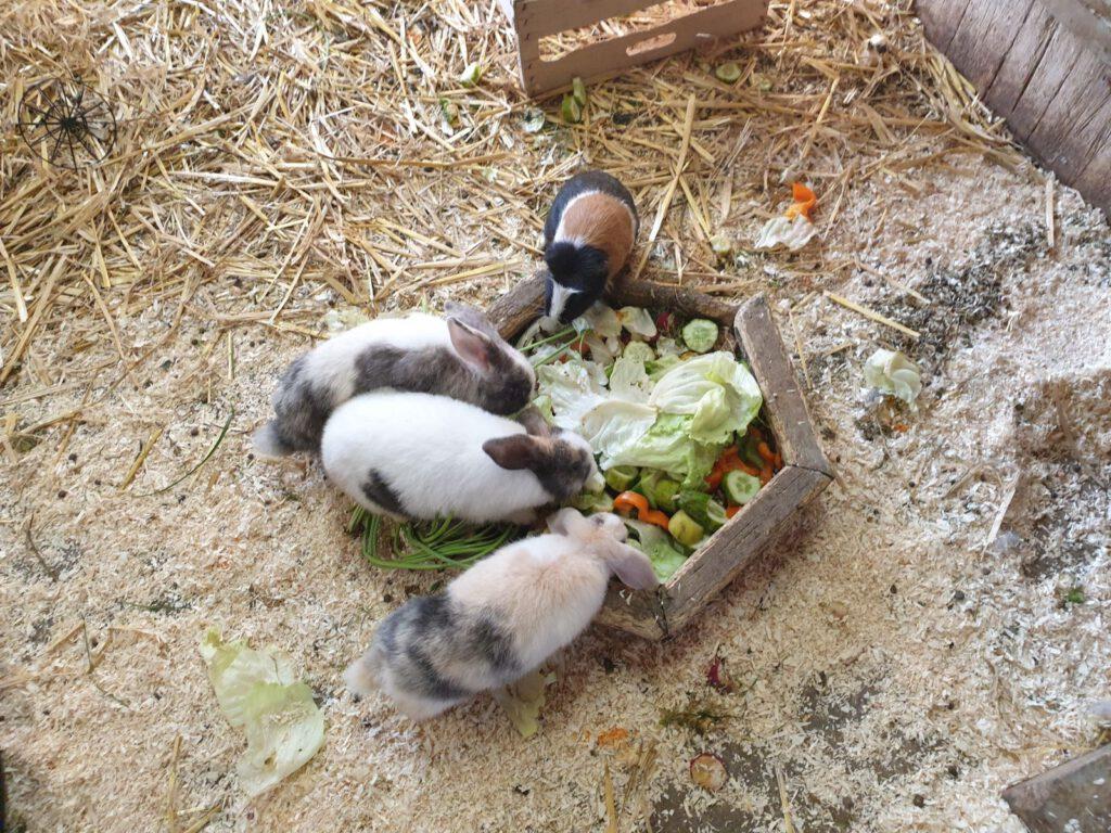 leckeres Obst und Gemüse lassen sich die Tiere schmecken