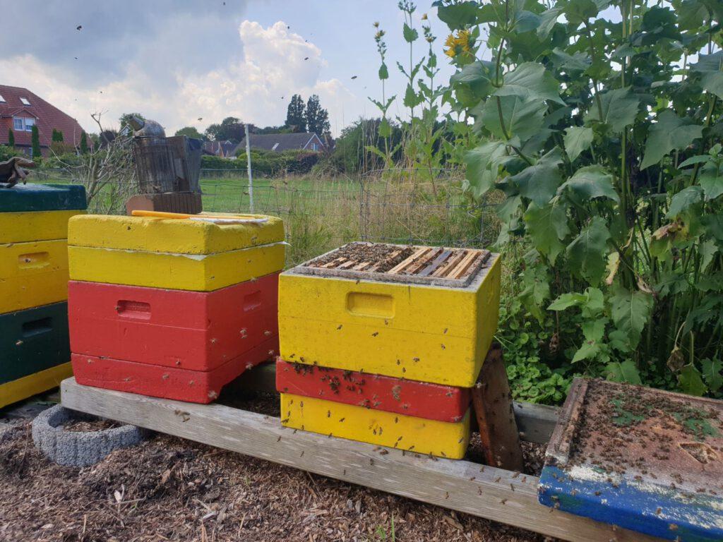 die emsigen Bienen schwirren bei dem schönen Wetter aus