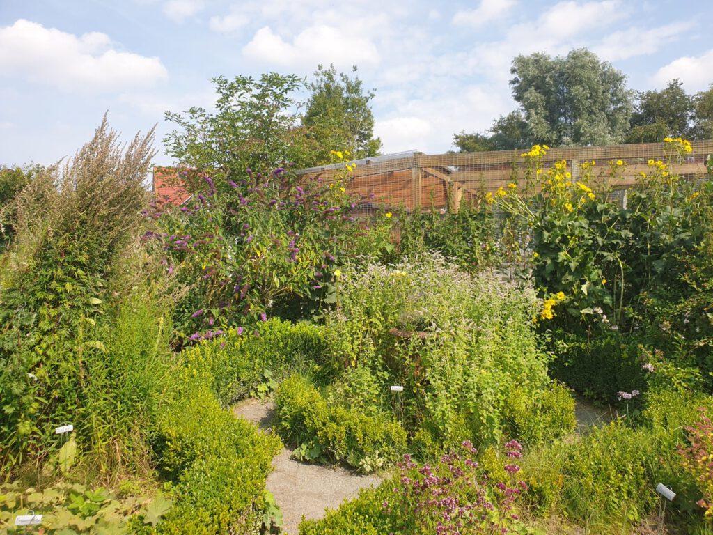 Der Kräutergarten ist derzeit eine blühende Oase im Tierpark