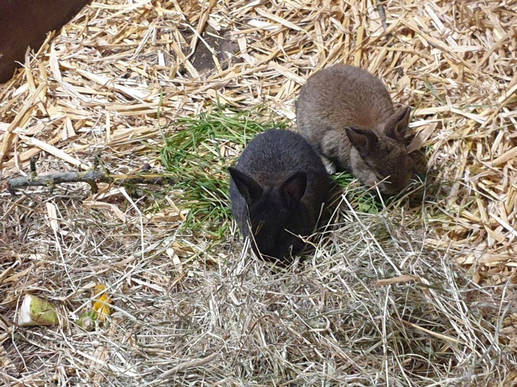 """zwei kleine Kaninchen im Stall - """"Frieda"""" hat Junge bekommen"""