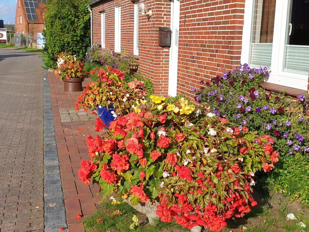 Günther Völskow hat auch in diesem Jahr wieder zahlreiche Blumentöpfe mit blühenden Pflanzen vor dem Haus stehen