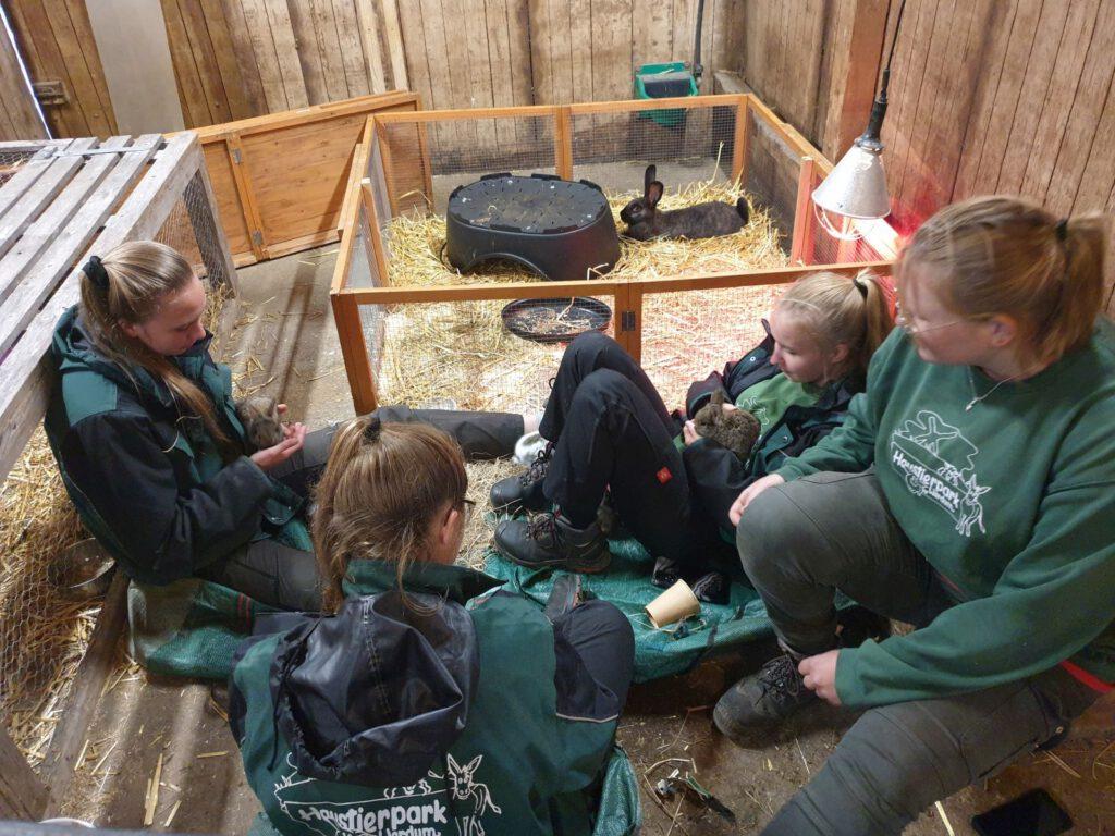 Die FÖJ`ler Nantke de Groot, Kea Fischer Jolin Haller üben schon mal unter Aufsicht von Kristin Bienert mit den kleinen Kaninchen die Streichelstunde