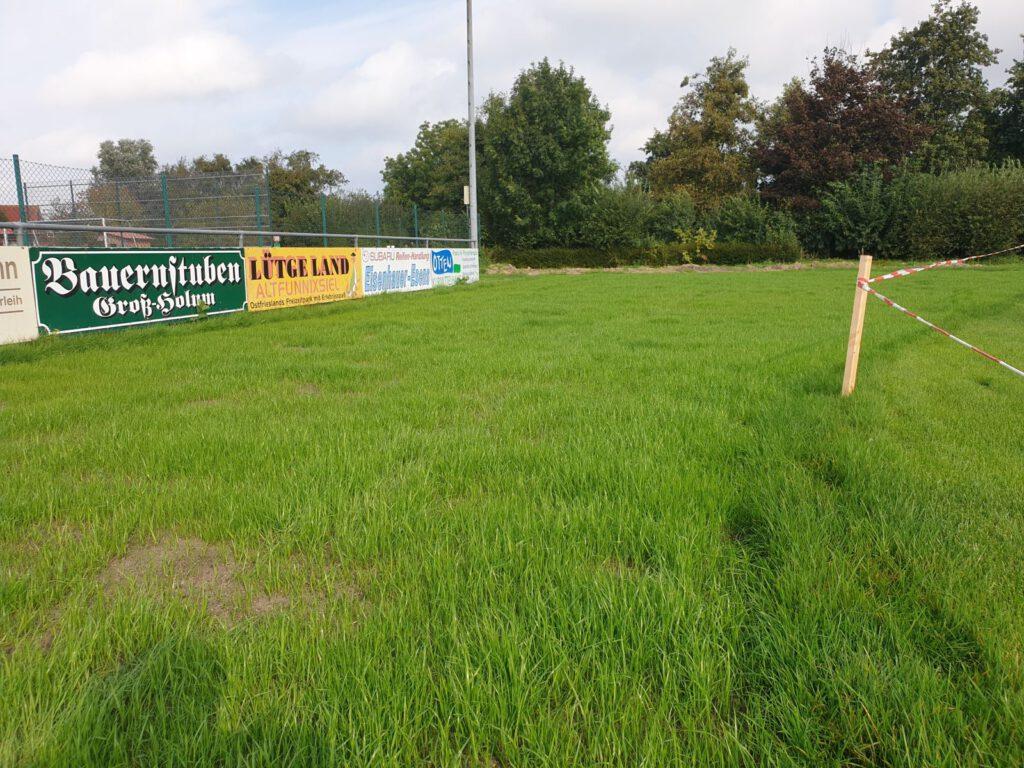 Der neue Rasen sprießt schon gut, aber wie man sieht hat er auch noch Lücken