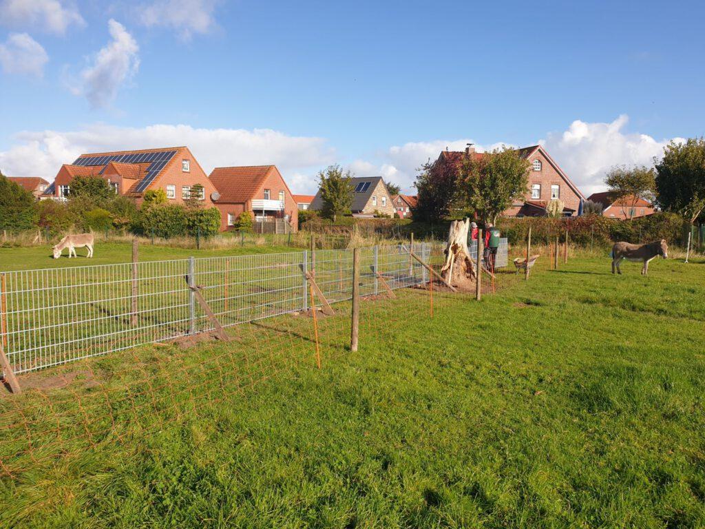 Der neue Zaun zieht sich quer durch die Eselweide. Die Esel selbst interessieren sich nicht für Bauarbeiten
